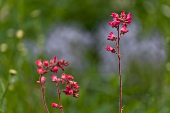 huerto y flores-13