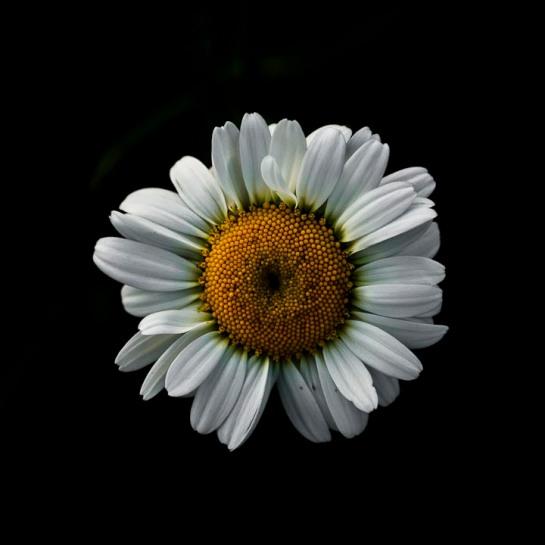 flores y huerto-5